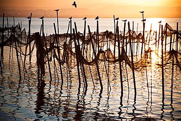 Fishing nets and seagulls, evening, Albufera de Valencia, Valencian Community, Spain.