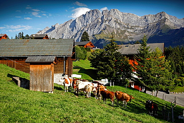 Landscape of a farm and exceptional views of the scenery. Villars, Vaud, Switzerland, Europe.