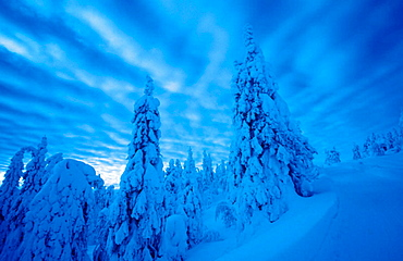 Winter forest, Lapland, Finland