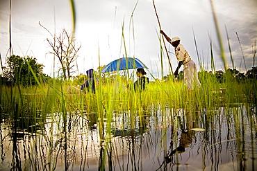 the okavango delta.