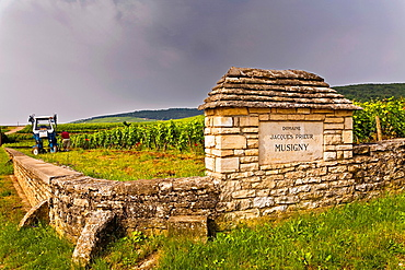 domaine jacques prieur in musigny.