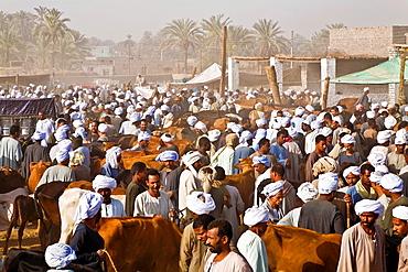 darow animal market.