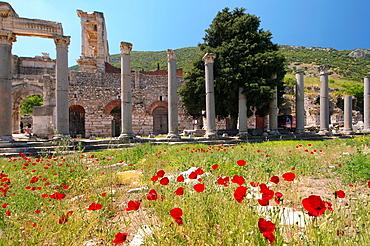 Antique city of Ephesus, poppy flowers in front, Turkey, Western Asia.