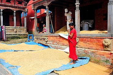 Woman spreading rice to dry, Changunarayan, Kathmandu Valley, Nepal