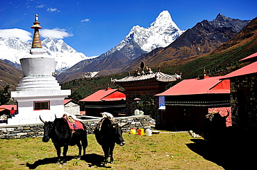 Buddhist monastery of Tengboche or Thyangboche and Ama Dablam peak, Sagarmatha National Park, the Himalaya range, Khumbu area, Solukhumbu District, Sagarmatha Zone, Nepal