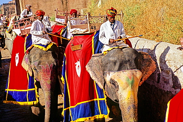 Elephants for sightseeing, Amber Fort or Amer Palace, next to Jaipur, Rajasthan state, India