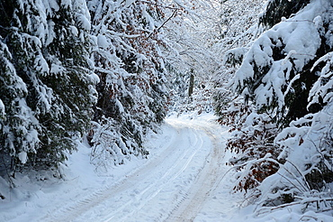 Landscape of a little trail going through the forest in winter, Upper Palatinate, Bavaria, Germany