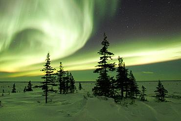 The Northern Lights (Aurora Borealis) in late winter, Churchill, Manitoba, Canada.