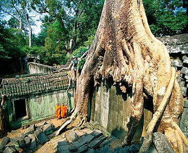 Ta Prohm temple, complex of Angkor Wat, Angkor, Cambodia
