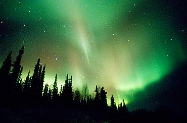 Aurora Borealis or Nothern Lights, Brooks range, Alaska, USA