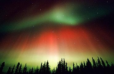 Aurora Borealis or Nothern Lights, Denali National Park, Alaska, USA