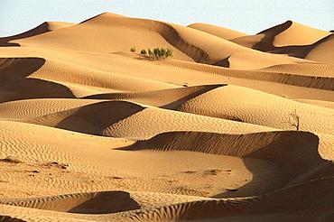 Sand dunes, Rub' al Khali ('Empty Quarter' in English) great sand desert, Oman, Arabian Peninsula