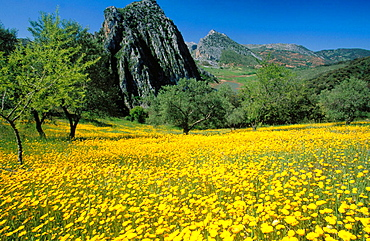 Landscape in Grazalema Natural Park, Cadiz province, Andalucia, Spain