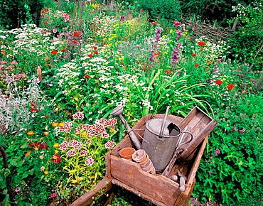 Organic cottage garden in late june, Hertfordshire, England, UK.