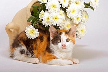 Tortoishell Kittens & Flowers