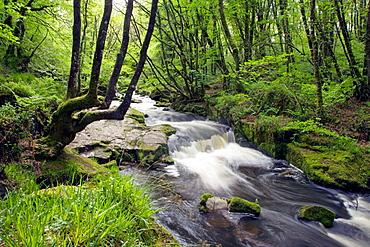 Golitha Falls River Fowey Cornwall UK