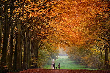 Felbrigg Great Wood Norfolk UK Early November