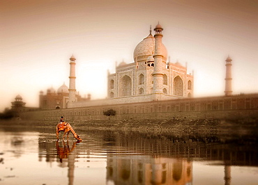 Camel drinking at Yamuna River with Taj Mahal in background, Agra, Uttar Pradesh, India