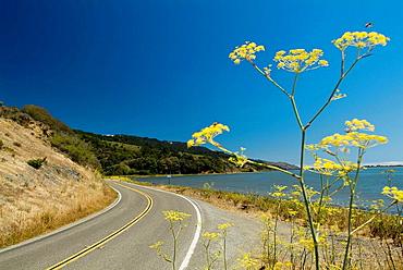California, Route 1, through Pointe Reyes National Seashore