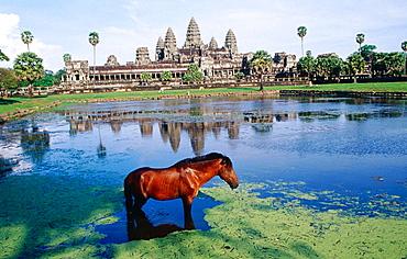 Horse, Temple complex of Angkor Wat, Angkor, Cambodia