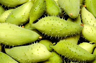 Food, Caigua also known as Achocha, Slipper gourd, Sparrow gourd, Cyclanthera pedata is a vegetable, grown for it's small fruits and leaves