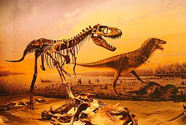 Skeleton of dinosaur in the Royal Tyrrell Museum, Alberta, Canada