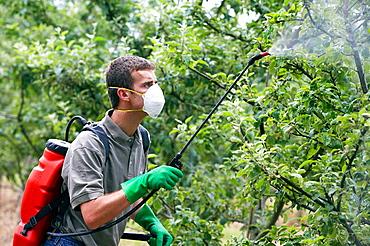 Farmer treating fruit trees with sprayer (Insecticides, Pesticides), Apple trees, Gipuzkoa, Euskadi, Spain.