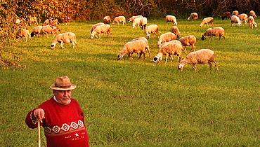 Shepherd at Skafidia, Peloponnese, Greece