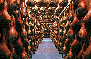 During seasoning, each ham is hand-checked one-by-one, San Daniele ham, Friuli, Italy.