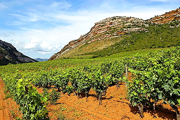 Vineyards of the AOC (Appellation d'origine controlee) Patrimonio Wine and AOC Muscatel of the Corsica Cape