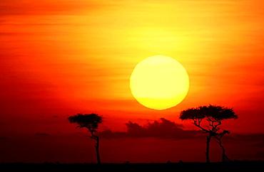 Sunset, Masai Mara, Kenya - 817-7311
