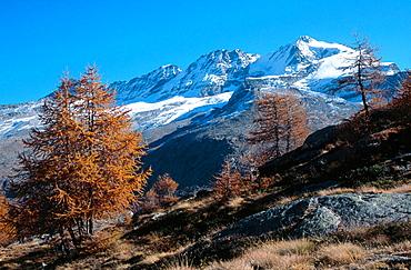 Parc du Grand Paradis Valsavarenche, Aosta, Italy.