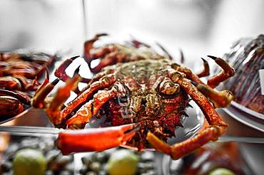 Crabs in restaurant, Santiago de Compostela, La Coruna province, Galicia, Spain, 2008