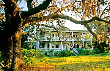 Low country Spanish Moss & Beaufort home at sunrise, Beaufort, South Carolina, USA