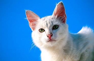 Cat of Greece