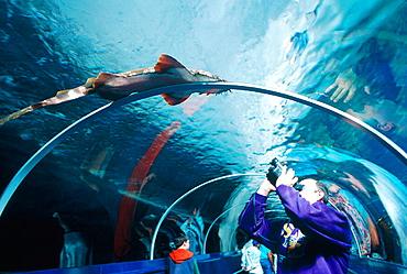 Aquarium, Darling Harbour, Downtown, Sydney, Australia.