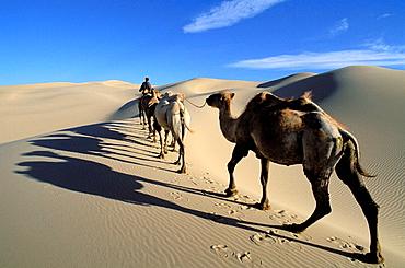 Camel caravan, Khongoryn Els Dune, Gobi Desert, Gobi National Park, Omnogov province, Mongolia