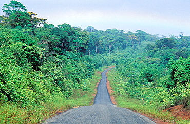 Road for Kaw, French Guiana, France