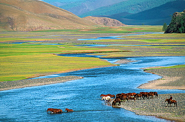 Rallying of horses drove, Orkhon valley, ovorkhangai province, Mongolia.