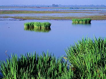 Donana National Park, Huelva province, Andalucia, Spain