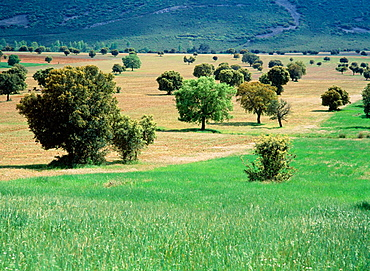Meadow, Cabaneros Natural Park, Ciudad Real province, Spain