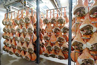 San Daniele ham preparation and maturing, San Daniele del Friuli, Udine, Friuli Venezia Giulia, Italy, Europe