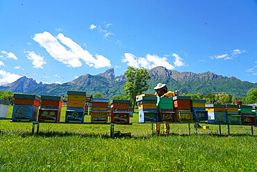Carniolan honey bee hives in the Dolomites, Santa Giustina, Belluno, Italy, Europe