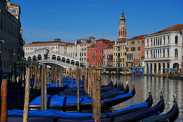 Gondolas on the Grand Canal and Rialto Bridge during Coronavirus lockdown, Venice, UNESCO World Heritage Site, Veneto, Italy, Europe