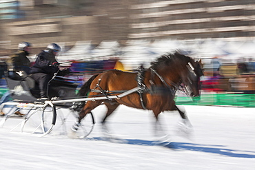 Sleigh race, Quebec Winter Carnival, Quebec City, Quebec, Canada, North America