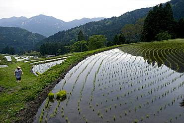 Farmer tending to rice paddy terraces in early spring in mountain village of Hata, Takashima, Shiga, Japan, Asia