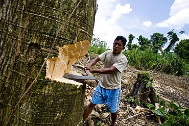 Working in the chakra (garden), Amazon, Ecuador, South America - 824-97