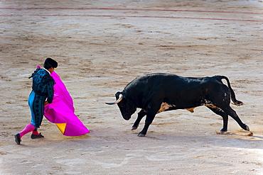 Bullfight featuring matadors, San Fermin festival, Pamplona, Navarre, Spain, Europe