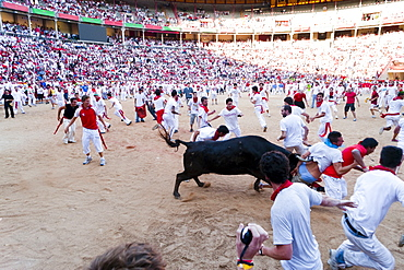 Amateur bullfight with young bulls, San Fermin festival, Pamplona, Navarra (Navarre), Spain, Europe