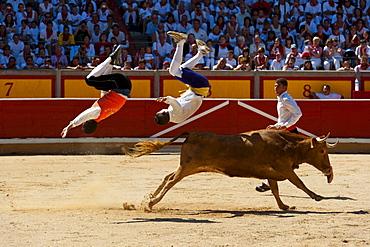 Festival de Recortadores (Trimmers Festival), San Fermin fetival, Pamplona, Navarra (Navarre), Spain, Europe